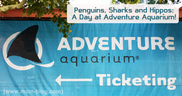 Shark Week At Adventure Aquarium And Hippo Haven