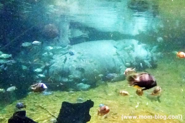 Shark Week At Adventure Aquarium And Hippo Haven
