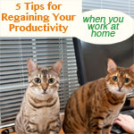 5 Ways to Update Your Work at Home Routines for Better Productivity