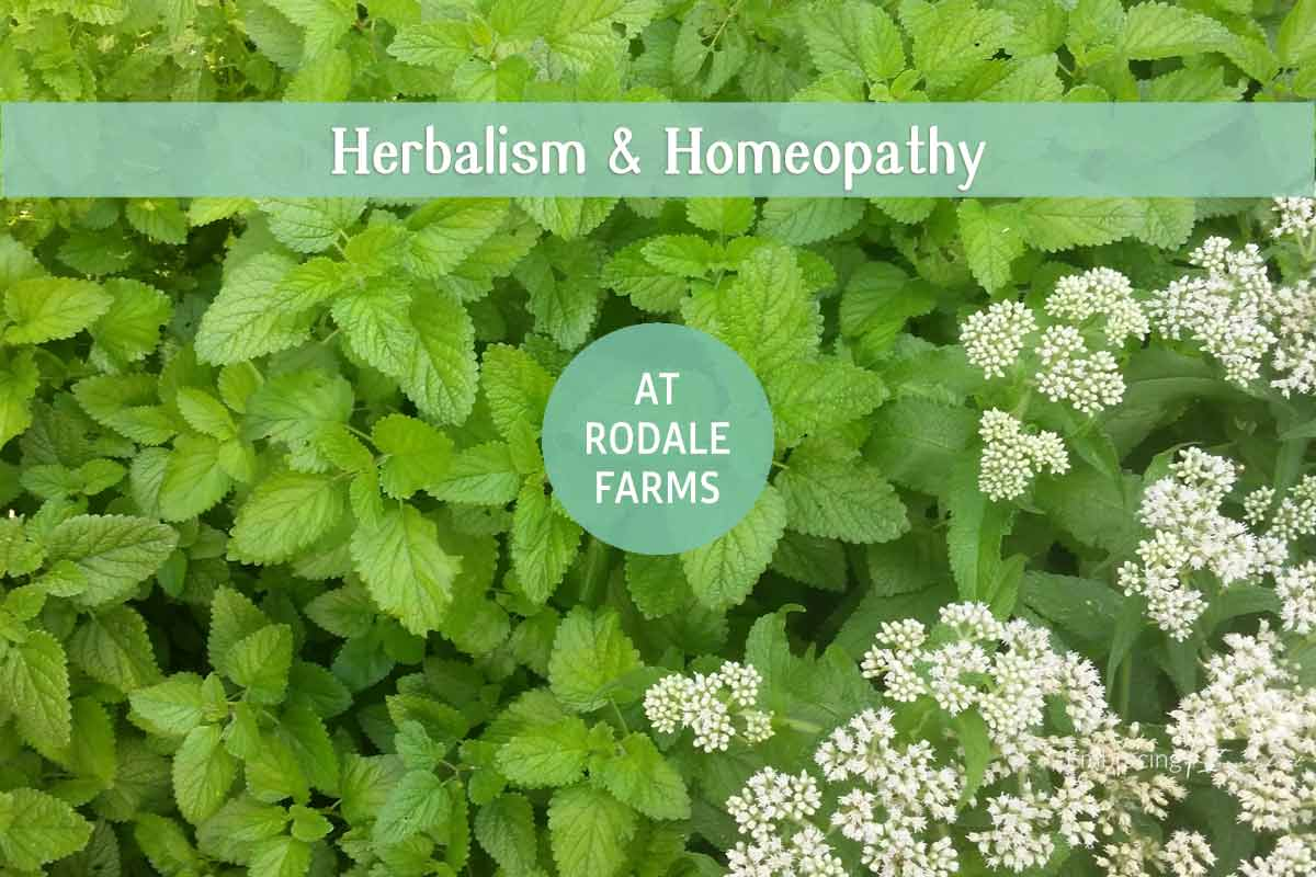 herbalism-homeopathy-rodale-farms-f