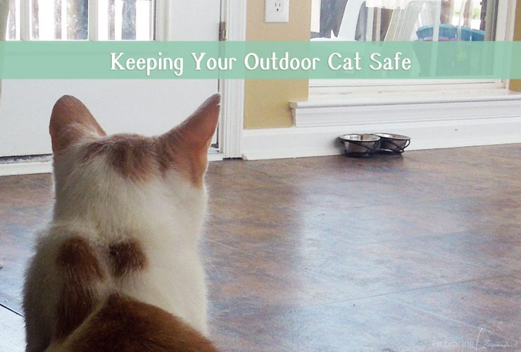 Keeping Your Outdoor Cat Safe All Year Long