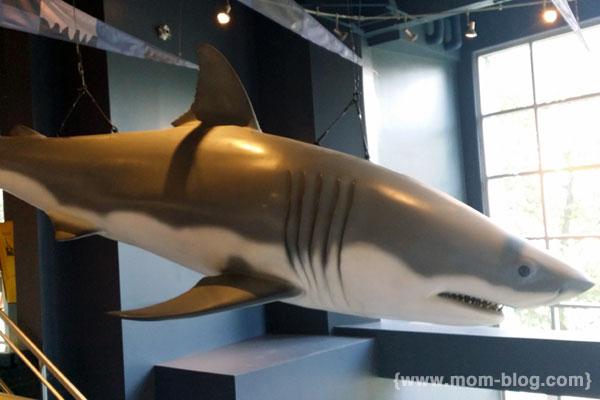 20140809_shark