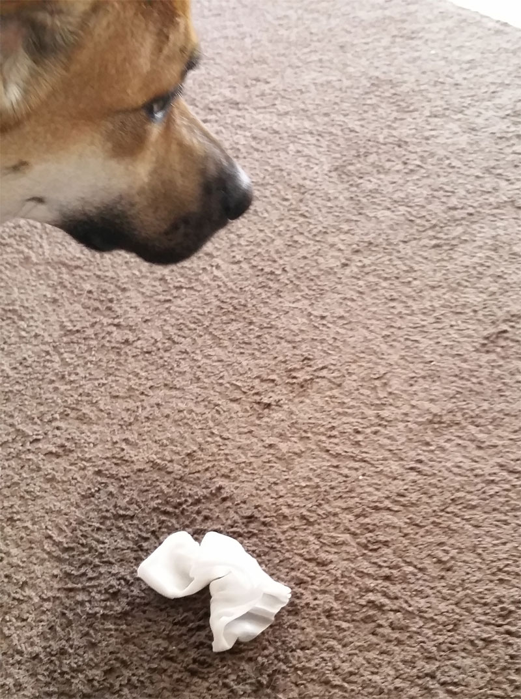 1105-dog-accident