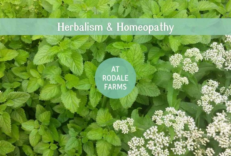 Herbal Skincare and Remedies for Beginners