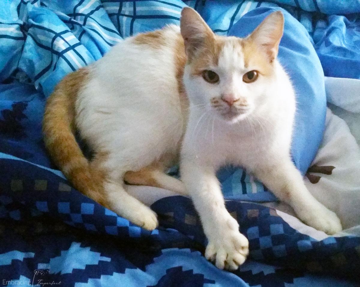 1108-cat-in-bed