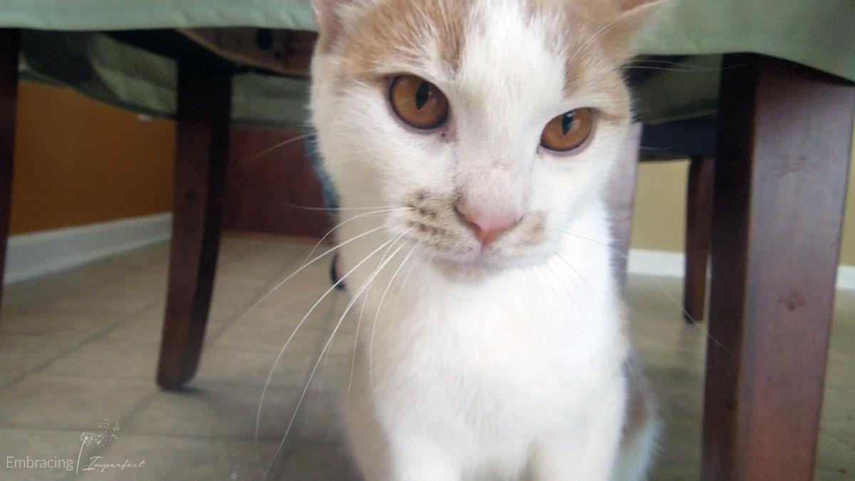 1108-curious-cat