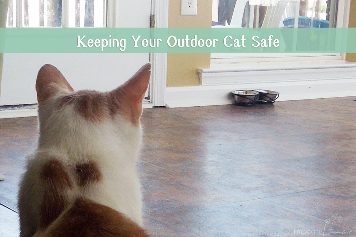 1108-keeping-your-outdoor-cat-safe
